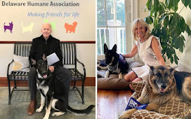 Joe Biden's German Shepherd dogs moved out of White House after biting security agent