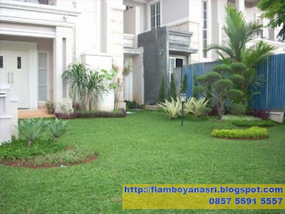 Tukang Taman Surabaya Taman Minimalis Rumput gajah