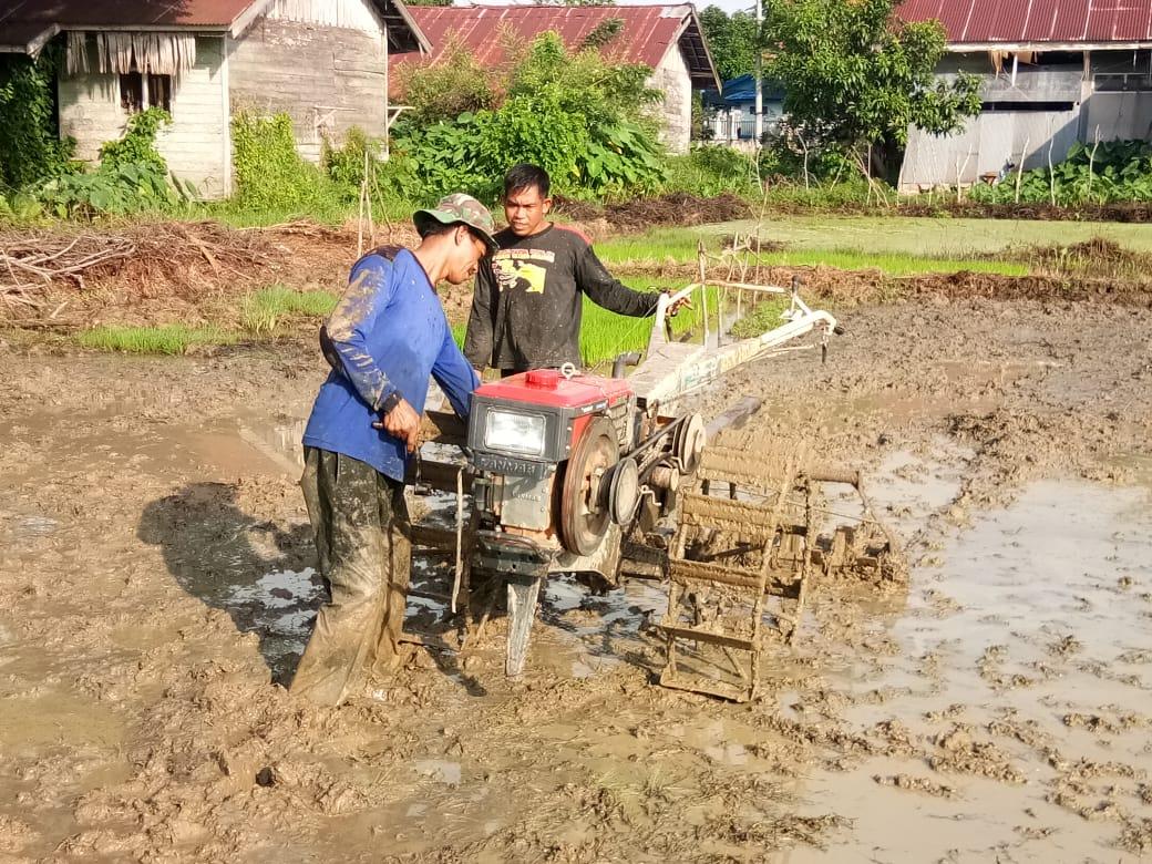 TNI Tak Hanya Jago Perang, Tapi Mahir Juga Bertani
