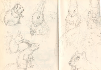 'character design' squirrel illustration jeunesse children écureuil