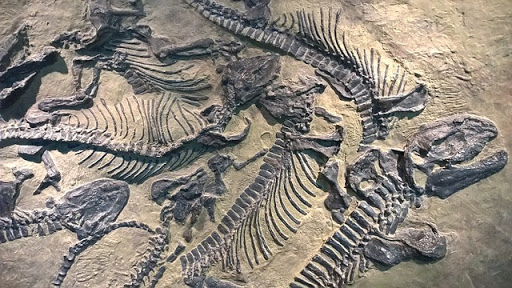 fosil, dinosaurus, paleontologi, zaman, purbakala, kini saya ngerti, ubur-ubur, kerang, kerangka, raksasa fosil, jenis fosil, bentuk fosil, terbentuknya fosil