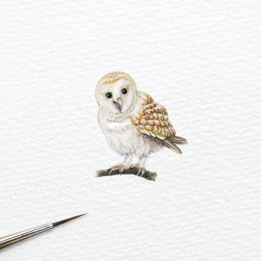 04-Barn-Owl-Frank-Holzenburg-www-designstack-co