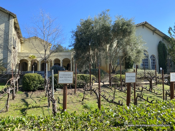 demonstration vineyard at Chateau St. Jean Vineyards and Winery in Kenwood, California