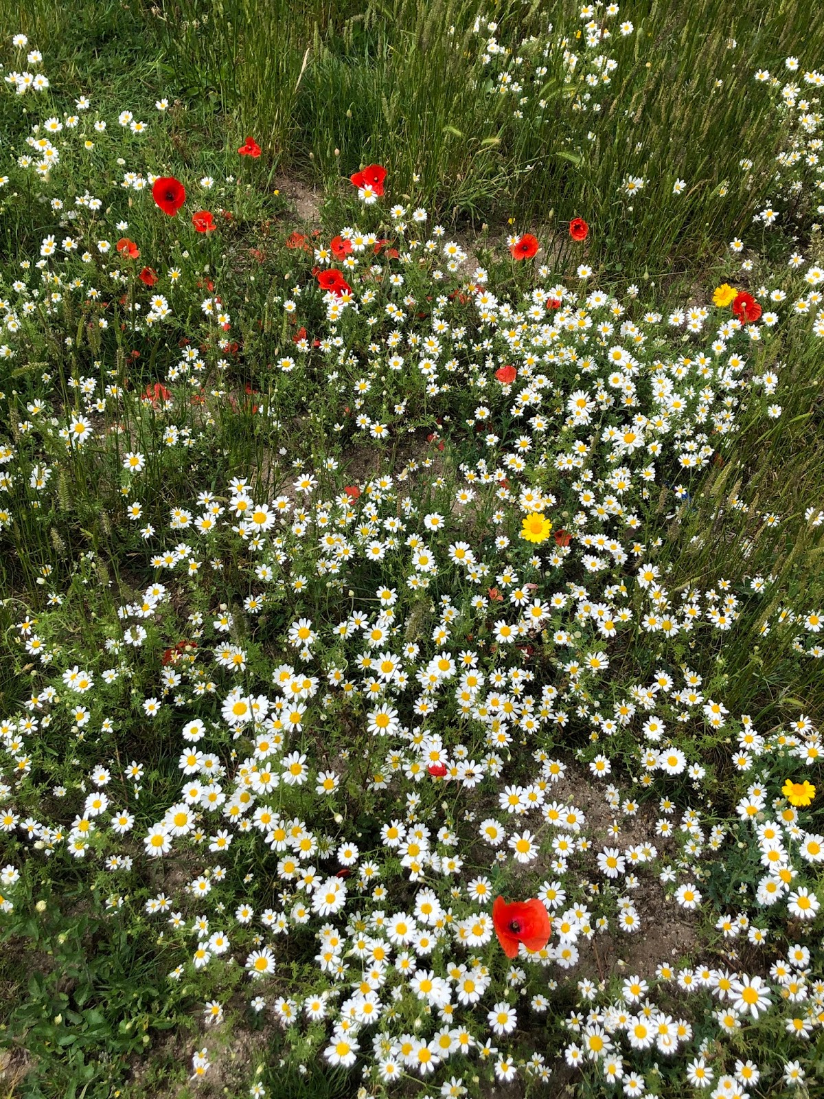 lifestyle, blogger, looking after yourself, flowers, field, wildflower