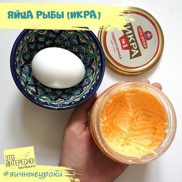 икра - яйца рыб