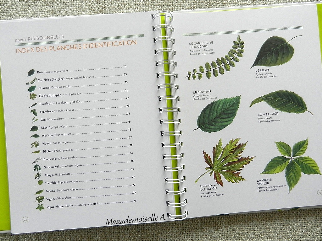 maaademoiselle a.: || l'herbier des feuilles (présentation & avis
