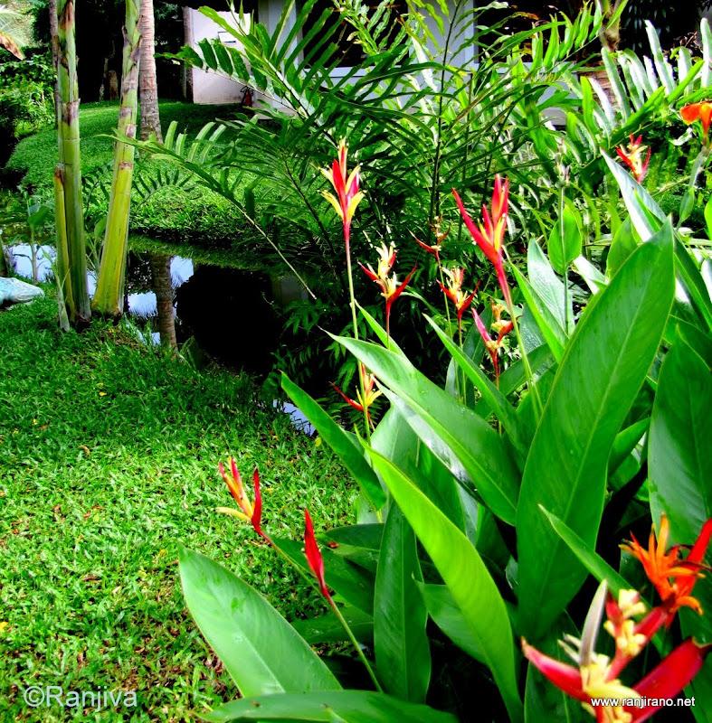 fleur exotique oiseau de paradis et interlude musical paysages et fleurs au fil de l 39 eau. Black Bedroom Furniture Sets. Home Design Ideas