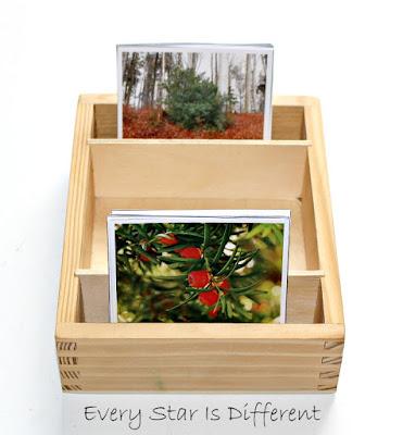 Christmas Botany Match Up