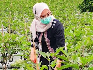 Ambu-anne-bupati-purwakarta-panen-sayuran-kebon-urban-farming
