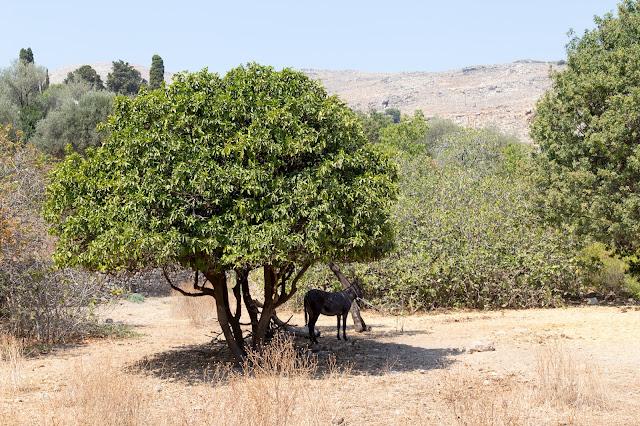 lindos viaggio rodi rodos grecia estate mare farfalle valle colosso granchio asinello gatti