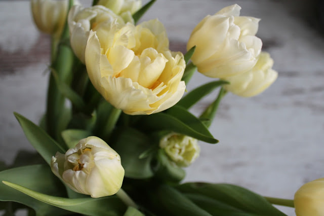 FRIDAY Live and see Tulpen