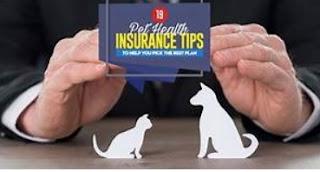 Як отримати право Pet Поліс медичного страхування?