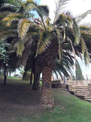 A palm in Parco Bonaria already sick, note yellowing fronds.