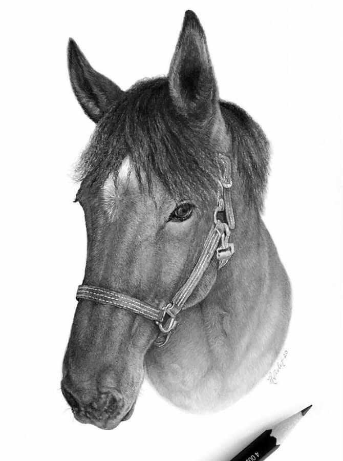 11-A-lovely-horse-Helen-Violet-www-designstack-co