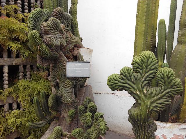 Vegetación en Museo Larco en Lima Perú