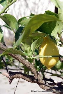 citron et feuilles