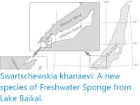 https://sciencythoughts.blogspot.com/2020/05/swartschewskia-khanaevi-new-species-of.html