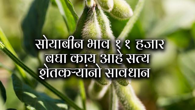 सोयाबीनचा भाव 11000 हजार रुपये पहा काय आहे सत्य शेतकऱ्यांनो सावधान || Soyabean rate.
