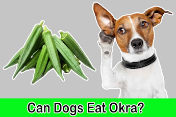 can dogs eat okra, can dogs have okra, is okra safe for dogs