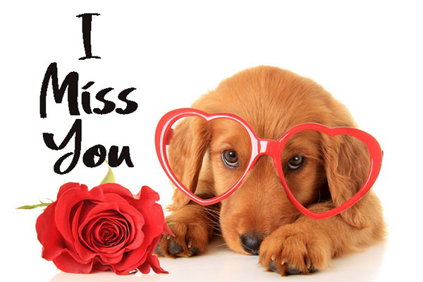 i miss you love you images hd i love you images download
