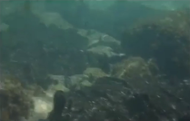 Συγκλονιστικές εικόνες από την ρύπανση στον βυθό της Σαλαμίνας (βίντεο)
