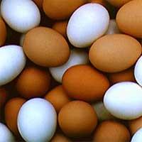 Telur Ayam Kampung