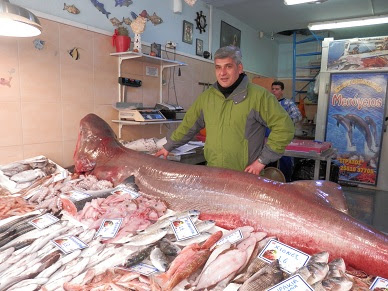 Καρχαρίας στα δίχτυα ψαράδων στην Αλεξανδρούπολη