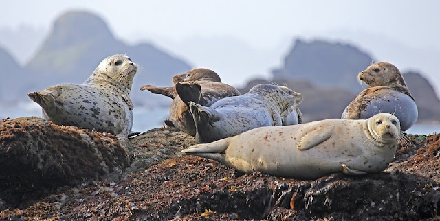 Image: Seals Resting on a Rock, by Skeeze on Pixabay