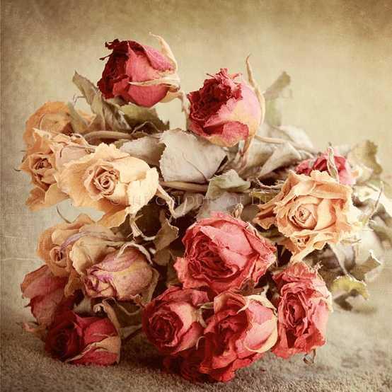 Zoom frases imagenes de flores vintage for Imagenes retro vintage
