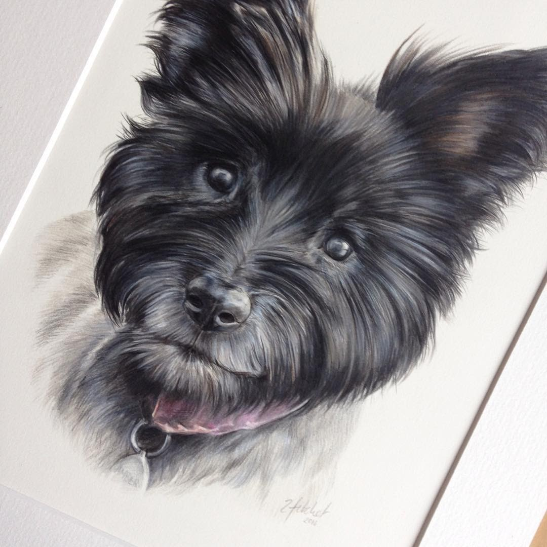 03-Amber-the-cairn-terrier-Zoe-Fitchet-Pet-Portraits-Cats-and-Dogs-Drawings-www-designstack-co
