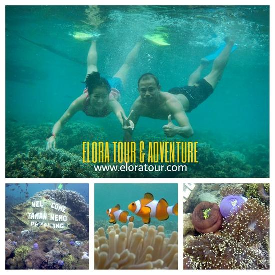 paket-tour-pahawang-1-hari-snorkeling
