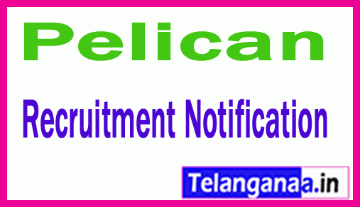 Pelican Recruitment Jobs For Freshers Apply
