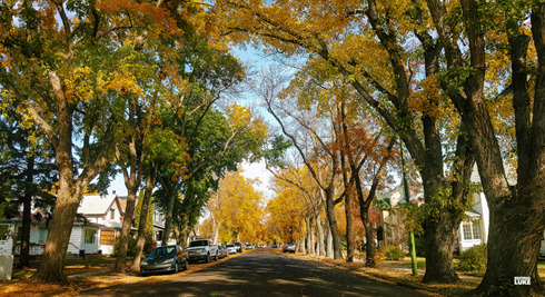 Autumn Medicine Hat Alberta Fall Colours