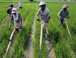 "<img src=""http://1.bp.blogspot.com/-32-  h264ay_U/Vohm1GYmYFI/AAAAAAAAAIA/uerJTg524HM/s1600/2.jpg""   alt=""Peranan Penting Sumber Informasi Pertanian Indonesia"">"