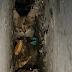 В Оболонському районі врятували кошеня, що опинилося у кістяній пастці