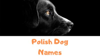Polish Dog Names