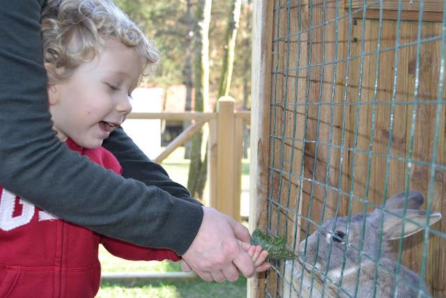 Tavşan beslerken, Güral Sapanca Wellness Park, Sapanca