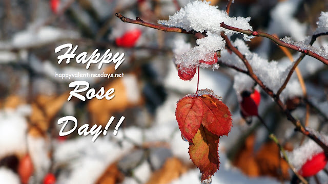 happy-rose-day-images