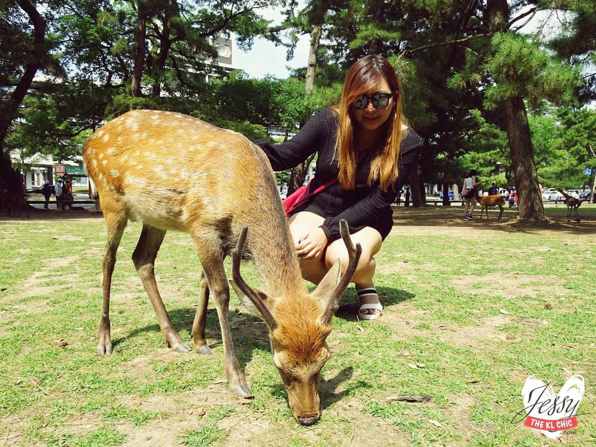 Nara Day Summer Trip | Japan