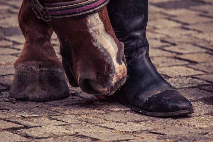 S'occuper des pieds de son cheval : Stage PEL avec Guillaume Parisot