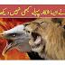 The Most Dangerous Eagle Attacks 2020 | UrduBank