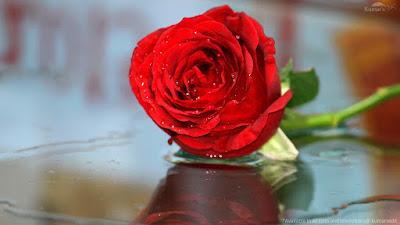 valentines-rose-day-2020