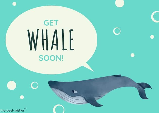 funny whale get well soon card