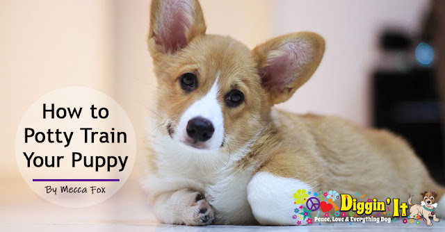 Diggin' It: How to Potty Train Your Puppy