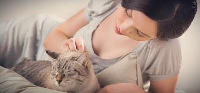 Cat health - Is my cat healthy?