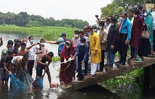 কুমিল্লার হোমনায় জাতীয় মৎস্য সপ্তাহে তিতাস নদীতে পোনামাছ অবমুক্ত