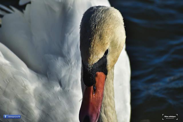 1 kwietnia obchodzimy Międzynarodowy Dzień Ptaków