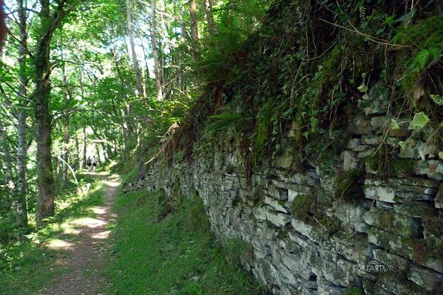 Bosque del Valle del Turia - Taramundi
