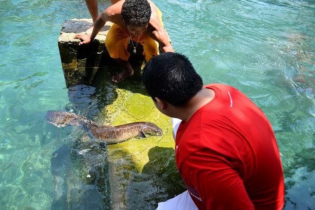 Perjalanan ke Ambon untuk menemui Morea, Belut Raksasa. Hal baru yang sangat menyenangkan dan seru!