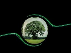 Biotic Communities (Community Ecology Communities, Niche, and Bioindicators)